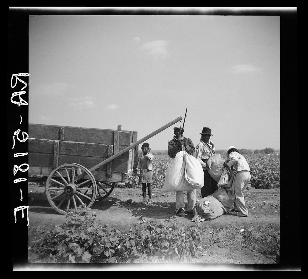 Cotton pickers. Kaufman County, Texas