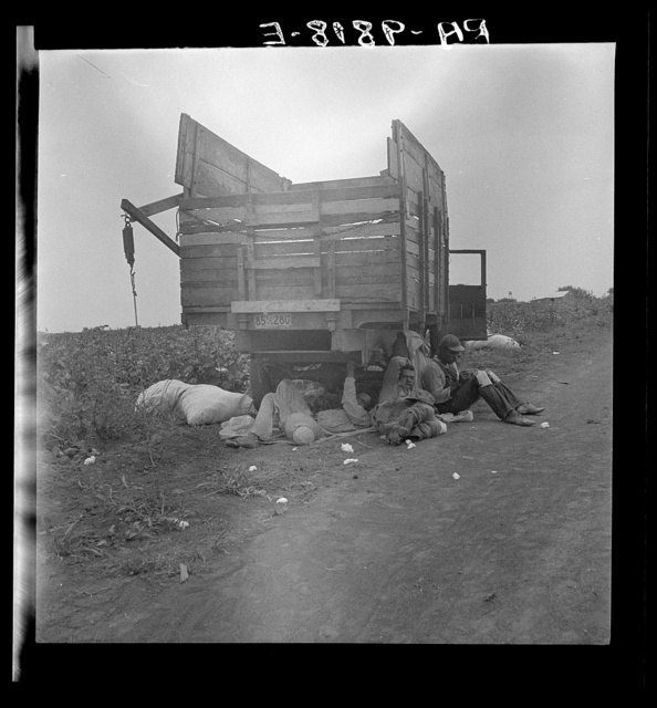 Cotton pickers' lunchtime. Near Corpus Christi, Texas