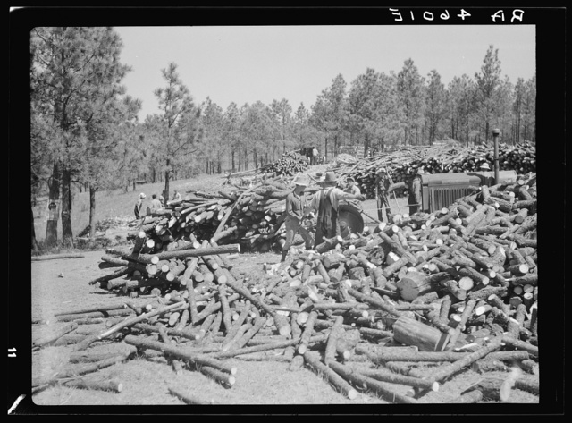 Cutting trees for fence posts. Pine Ridge, Nebraska