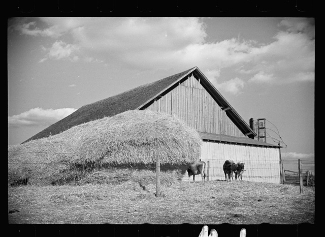 Dairy barn and outside haystack, Chattanooga, Tennessee