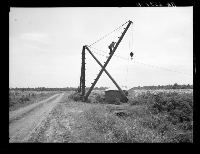 Derrick, characteristic sight in cane field. Used to transfer cane from wagons to trucks for transportation to mills. Louisana