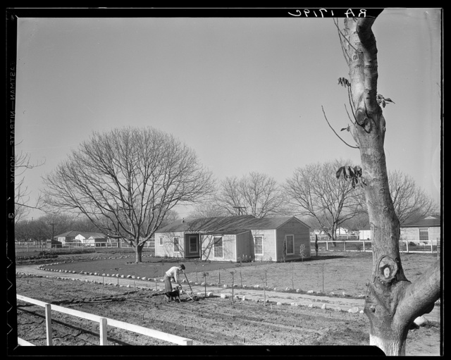 El Monte federal homesteads. One hundred occupied homes, each with nearly an acre. Average yearly income eight hundred dollars. California