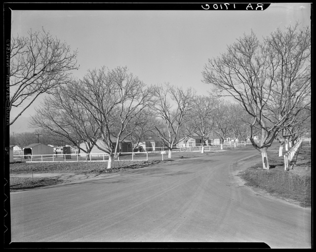 El Monte federal subsistence homesteads. One hundred occupied homes, each with three quarters of an acre. Average yearly income eight hundred dollars. California