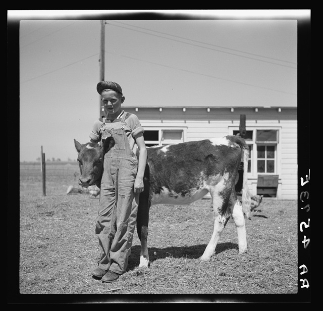 Farmsteader's son with prize 4-H Club calf. Fairbury Farmsteads, Nebraska