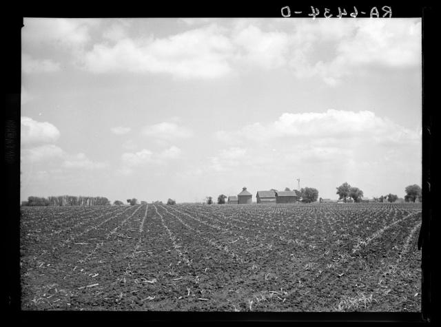Gibson City (vicinity), Illinois. A corn field and concrete corn crib
