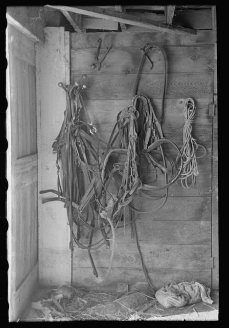 Harness in barn of H.H. Tripp, near Dickens, Iowa