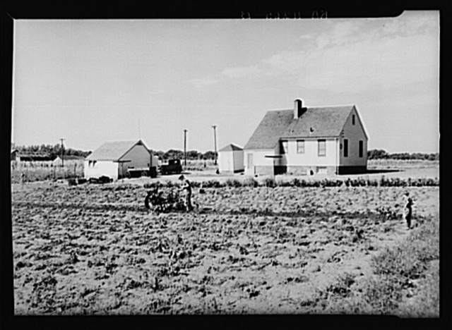Homesteader digging potatoes with tractor digger. Granger Homesteads, Iowa