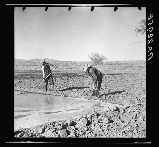 Irrigating a field. Dona Ana County, New Mexico