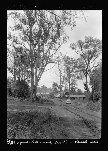 Kenya Colony. Nanyuki District. Kenya saw mills