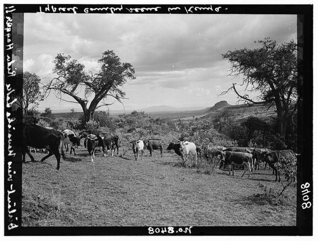 Kenya Colony. Rift Valley and en route to Nairobi. In the Rift Valley. Lake Naivasha in distance. Mentioned in the writings of Rider Haggard