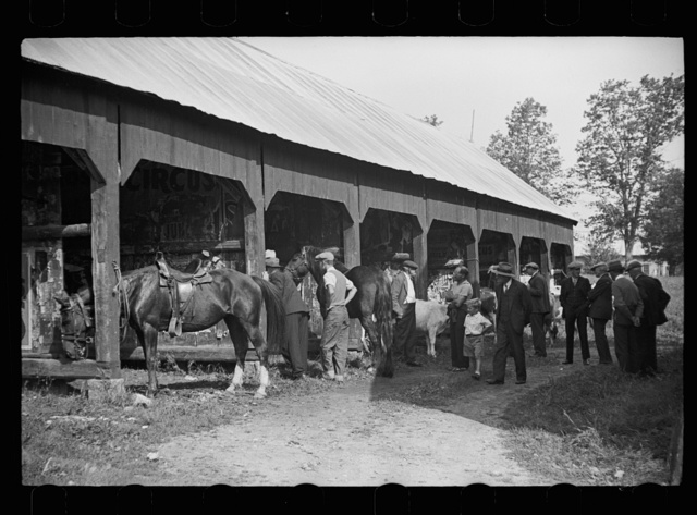 Much of the talk is about the stock which is proudly shown at the fair, Albany, Vermont
