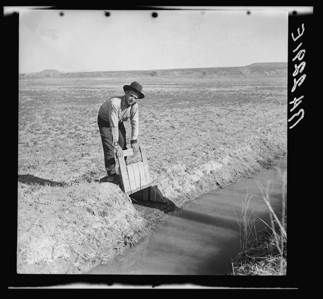 Opening the gate that allows water to flow into the field from irrigation ditch. New Mexico