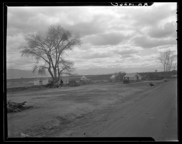 Part of a roadside ranch camp. Twelve tents in this group. Owned by one of the large farmers who is opposed to Resettlement Administration's migrant camp. California