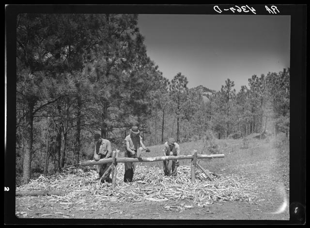 Peeling pine logs for fence posts. Dawes County, Nebraska