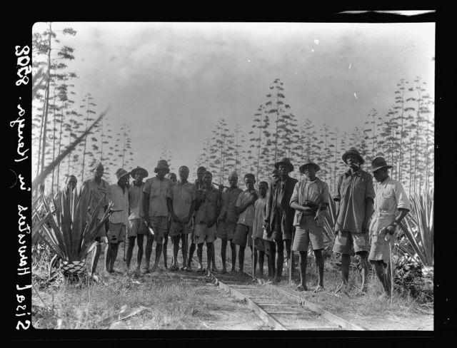 Plantations in Kenya Colony. Group of native sisal harvesters