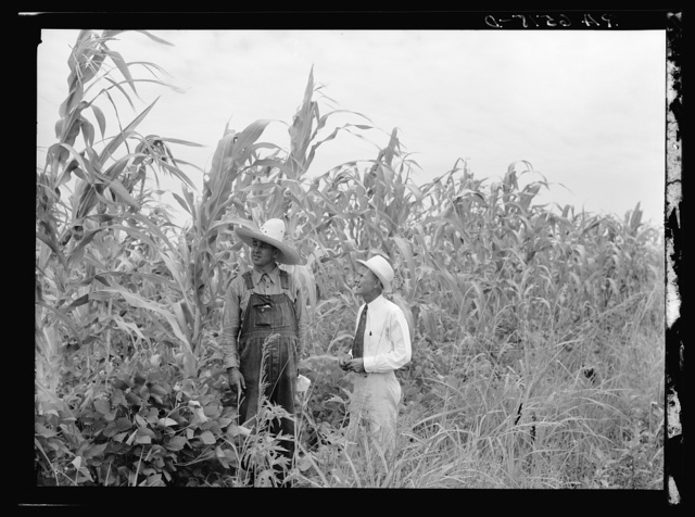 Rehabilitation client and rehabilitation loan supervisor in St. Charles Parish near New Orleans looking over corn yielding: one hundred bushels an acre. This corn has been planted on land which has grown fallow for more than twenty-six years due to a sugarcane blight