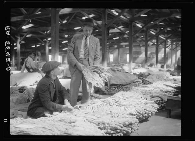 Rehabilitation supervisor examines client's tobacco crop. Durham, North Carolina