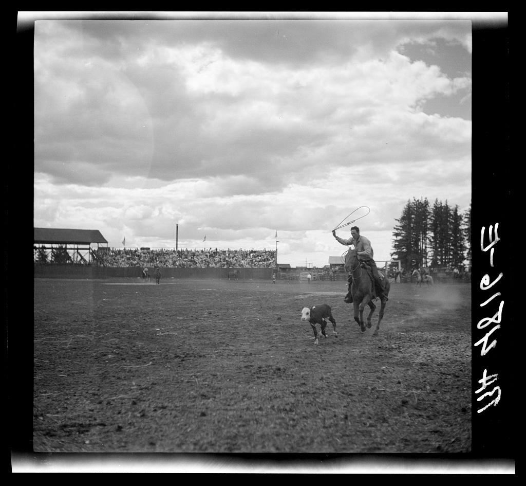 Roping a calf. Molalla Buckeroo (rodeo). Molalla, Oregon