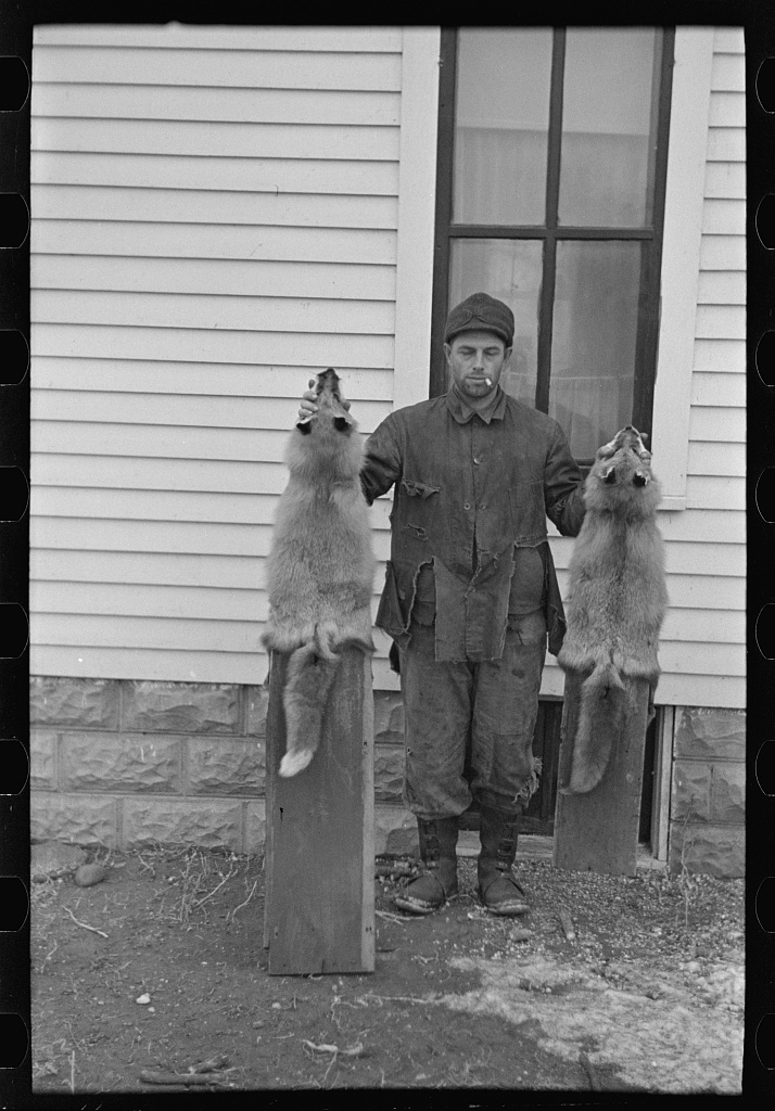 Roy Merriott, farmer, holding foxes which he has killed on his farm, near Estherville, Iowa