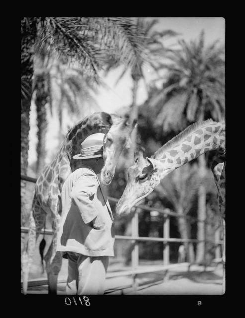 Sudan. Khartoum. Khartoum Zoo. Giraffe nosing Major Barker's pocket