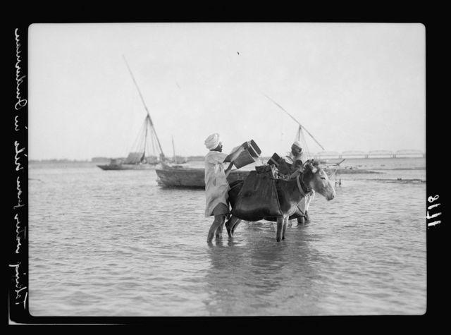 Sudan. Omdurman. Filling water skins from Nile. Donkey transport