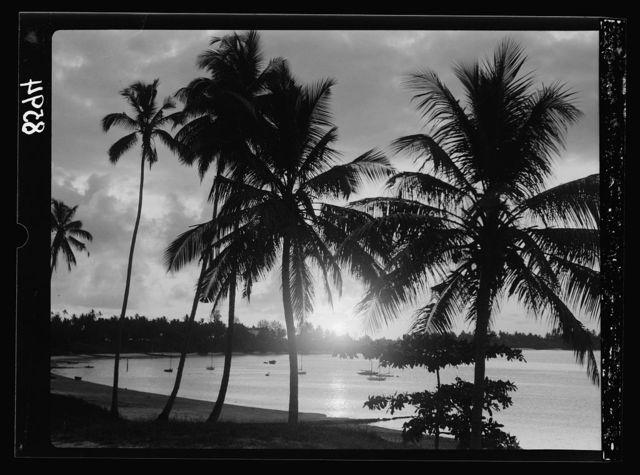 Tanganyika. Dar-es-Salem. Sunrise seen through palm grove from across the bay