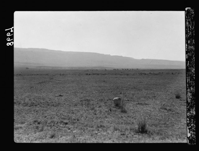 Tanganyika. Ngorongoro Crater. Plains in the crater. Herd of deer in distance