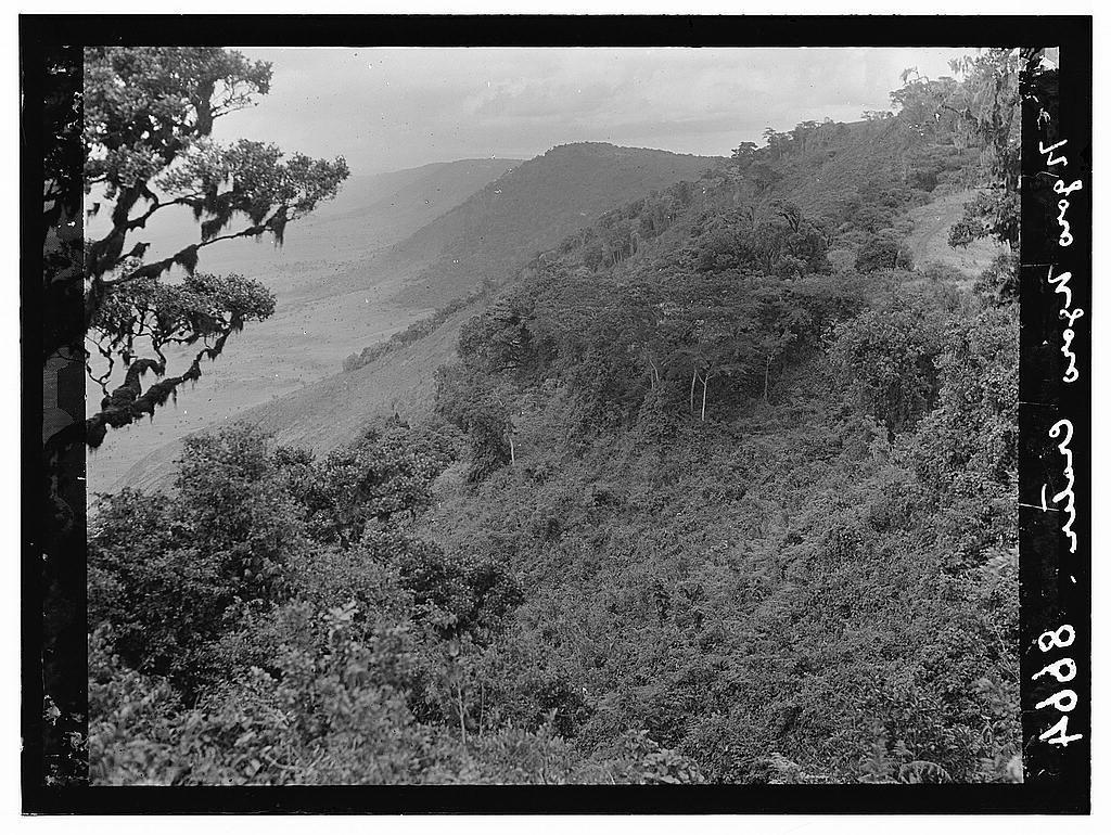 Tanganyika. Ngorongoro Crater. Wooded scene along crater's edge
