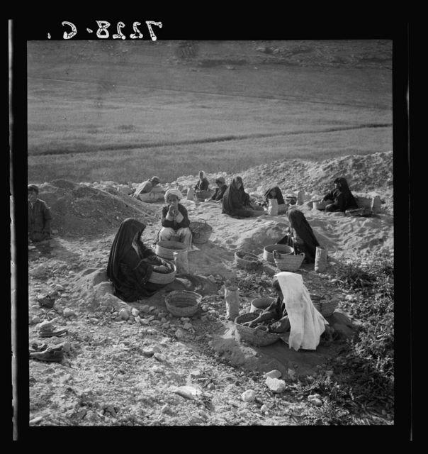 Tel Deweir (Lachish). Sifting debris for fragments & relics at Tel-Deweir