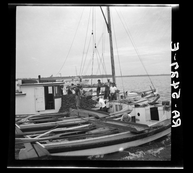 The buy boat of the oyster fleet. Rock Point, Maryland