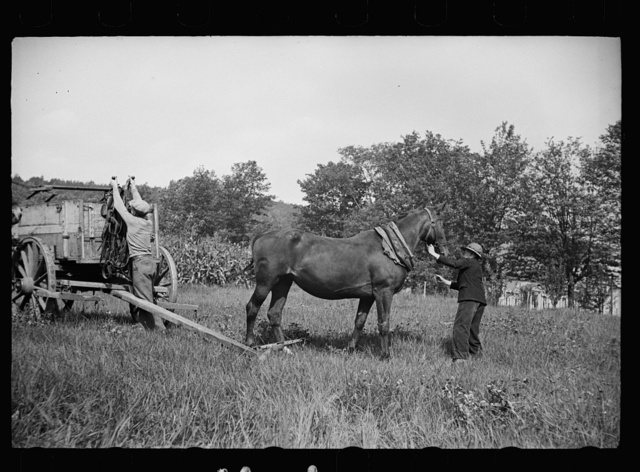 The wagon has carried them into the fair and now the horses will try for the blue ribbon, Albany, Vermont