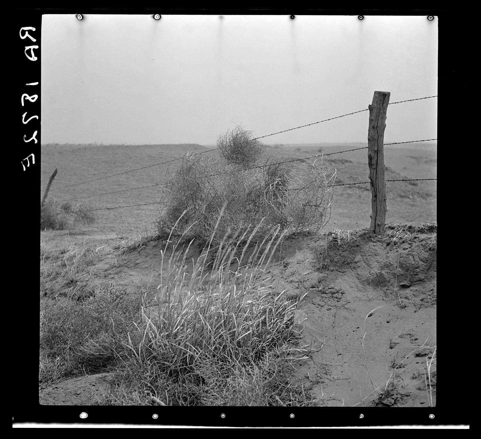 Tumbleweeds caught on a barbed wire fence. Ford County, Kansas