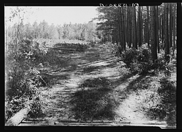 Various stages of timber growth on Eastern Shore land use project, Maryland