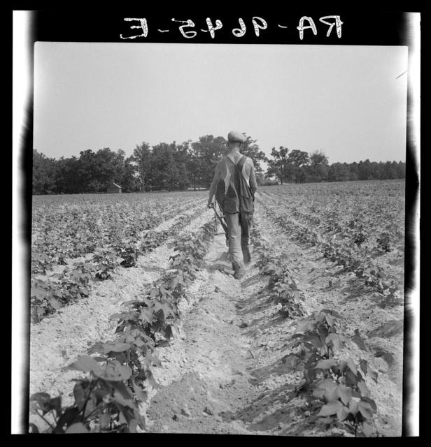 White tenant farmer works on shares. North Carolina