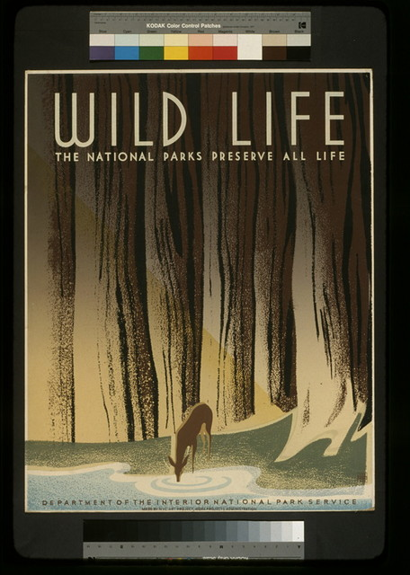 Wild life The national parks preserve all life.