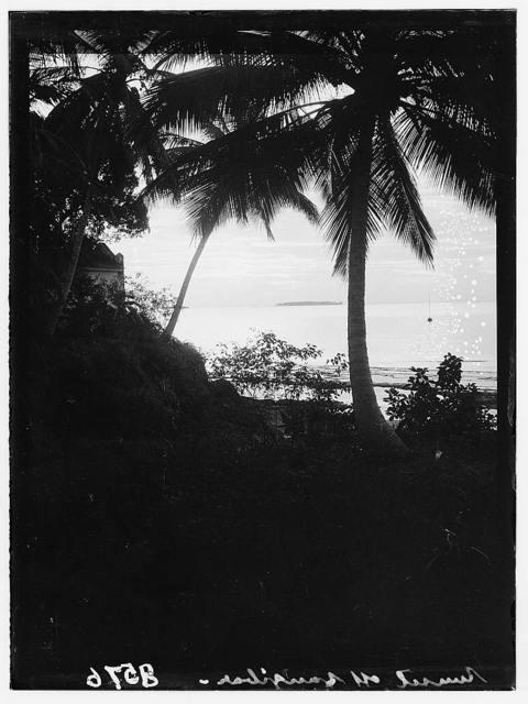 Zanzibar. Sunset through grove of royal palms