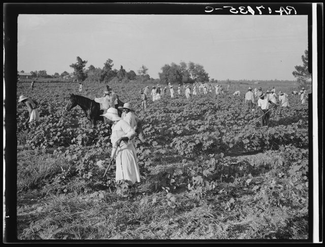 A crew of two hundred colored hoers were brought to the Aldridge Plantation to hoe cotton at one dollar a day. Many of them are ex-tenant farmers. Near Leland, Mississippi