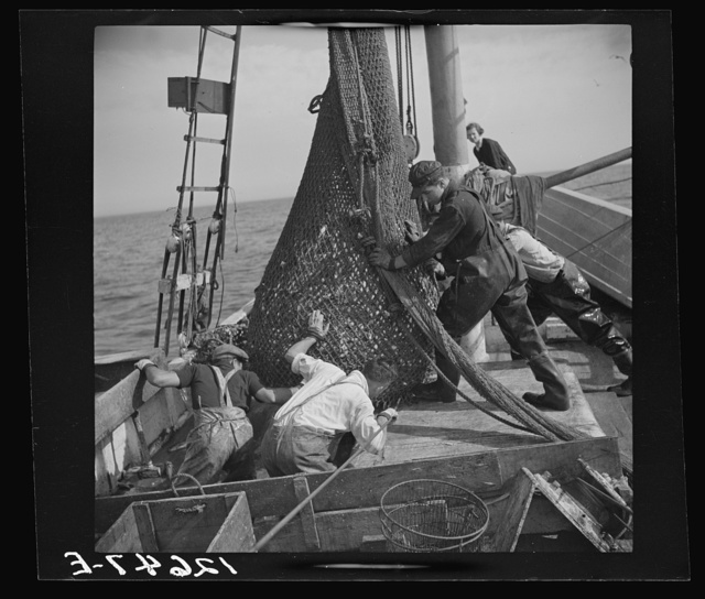"Aboard a trawler. The nets come aboard. Each net (there are two) usually drags about an hour, is then brought by the power winch. Crew and captain work on ""shares."" Commonly one share to each man, one to captain and one to boat. Captain maintains boat. Provincetown, Massachusetts"