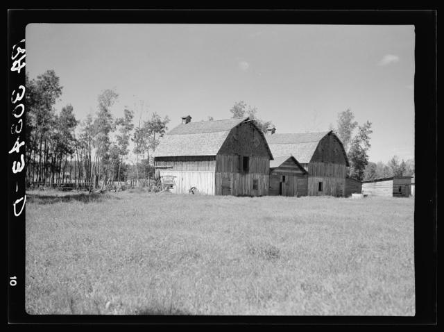 Barns on farm in cut-over areas near Ericsburg, Minnesota