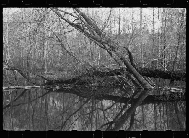 Beaver dam, Tuskegee Project, Macon County, Alabama
