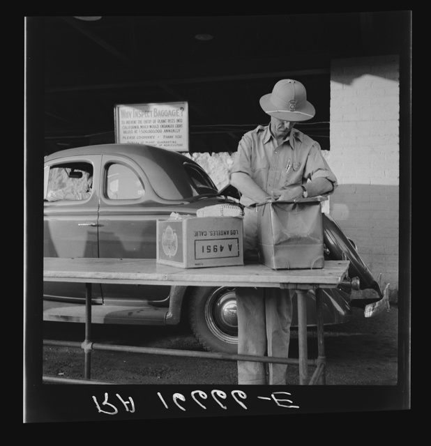 California state plant quarantine inspector examining baggage for insect pests. Arizona