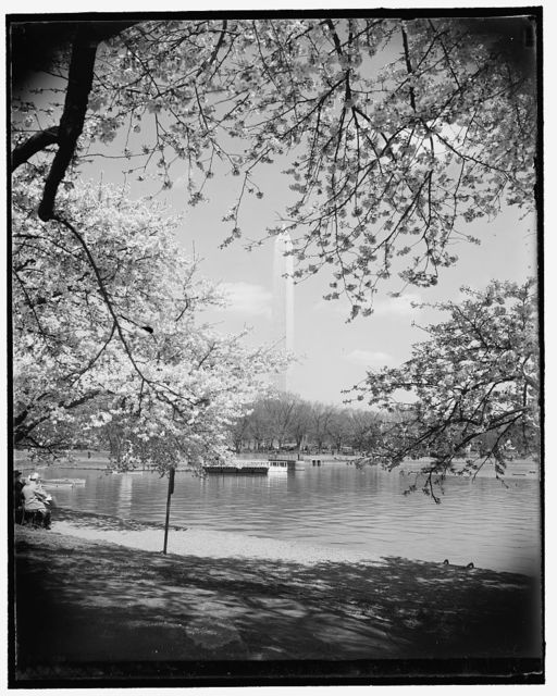 Cherry Blossoms on Tidal Basin