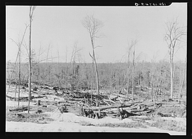 """Condition of forest as left by one of the lumbering companies operating at the present time. No attempt is made to clean up. """"The price of lumber would skyrocket,"""" said the foreman of this lumber company. Land in this condition is resold to individuals who cut up what is suitable for cordwood. Then the land is ready for sale for cut-over farming. Wisconsin"""