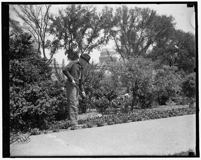 Congressional Gardener at hobby. Washington, D.C., May 7. Rep. William R. Poage, a first term Texas Democrat, likes gardening. He couldn't find a plot of ground in the crowded capital, so he used his newly acquired congressional influence and won permission to help tend flowers and shrubbery in the government's Botanical Gardens. So he works along with the regular laborers an hour or two daily. no. 1, 5/7/1937