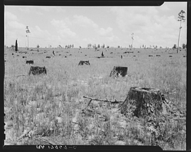 Cut-over long leaf yellow pine forest. The tract extends for thirty-seven miles. A lumber industry owner did no replanting and cut out on 1931 after eighteen years of operations. They employed approximately 3000 men. Near Kiln, Mississippi