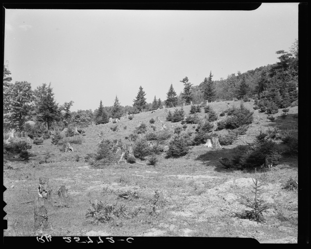 Cut-over woodland. Windsor County, Vermont