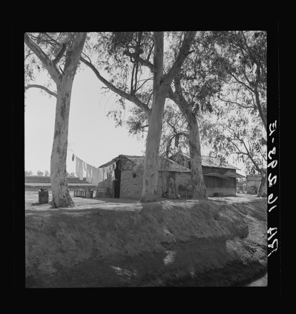 Ditch bank housing for Mexican field workers. Imperial Valley, California