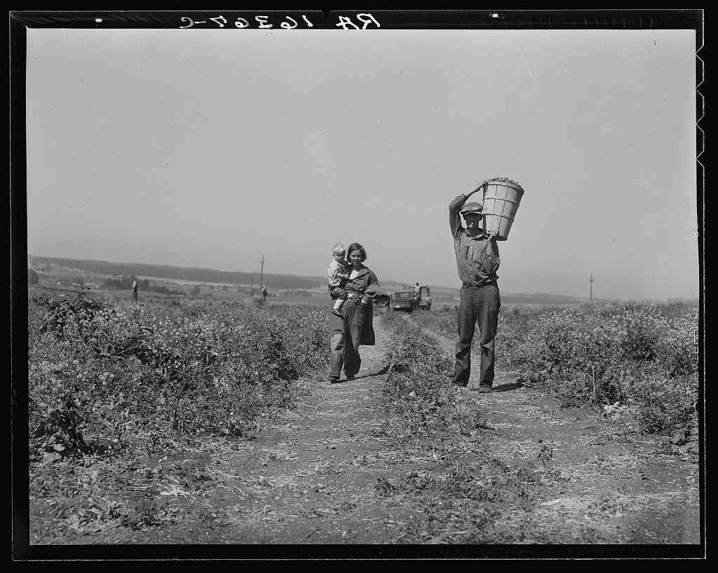 Drought refugees from Oklahoma at work in the pea fields near Nipomo, California