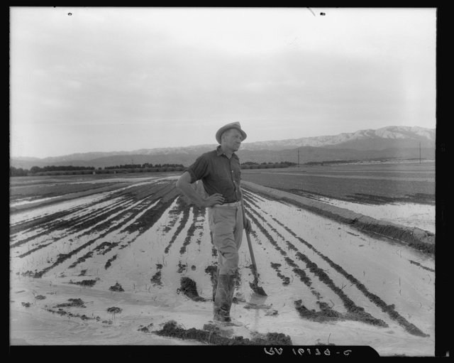 Field worker irrigating alfalfa and barley fields. The field produces eleven cuttings of alfalfa a year, yields nine to ten tons to the acre; sold for twenty-two dollars per ton in 1936. Near Indio, Coachella Valley, California