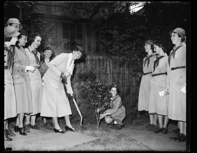 FIRST LADY PLANTS TREE FOR GIRL SCOUTS. WASHINGTON, D.C. MRS. FRANKLIN D. ROOSEVELT PLANTING A TREE IN THE MEMORY GARDEN OF THE NATIONAL GIRL SCOUT LITTLE HOUSE TODAY TO MARK THE PARTICIPATION OF THE GIRL SCOUTS IN THE BETTER HOMES IN AMERICA CAMPAIGN. THE TREE, A CAMELIA JAPONICA BUSH, WAS BROUGHT TO WASHINGTON FROM THE SAVANNAH, GA. HOME OF MRS. JULIETTE LOW, WHO FOUNDED THE GIRL SCOUT MOVEMENT IN THE UNITED STATES. JEAN ONLY, OF ARLINGTON, VA., IS HOLDING THE TREE FOR THE FIRST LADY